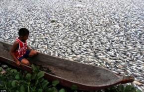 lago com muitos peixes mortos e um menino observando de um barco